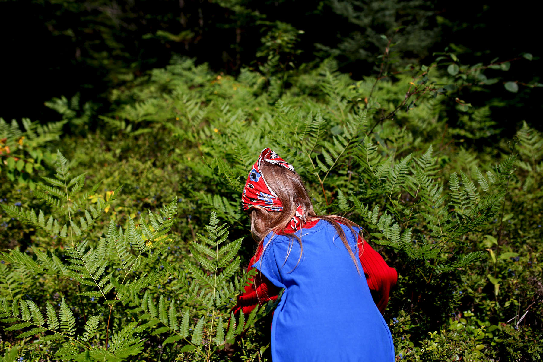 Lila picks blueberries in a forest in Bois Forte.