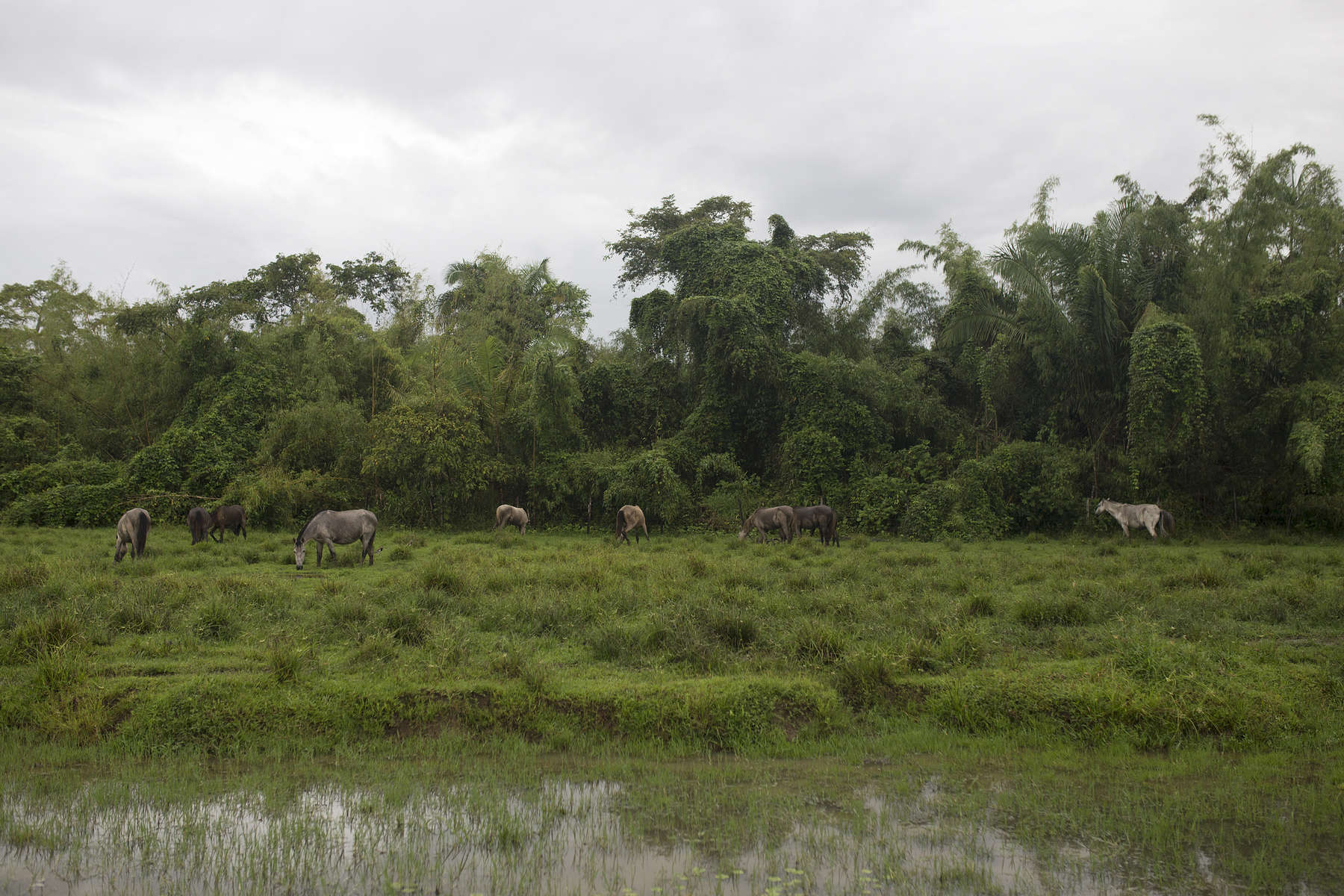 Horses graze a field behind the tiny village of Igarapé Grande where the surfers and their crew parked their riverboat.