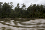 The normally calm Amazon River is far more rough following the tidal bore wave.
