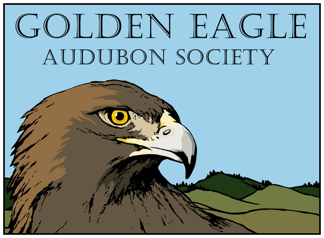 Golden_Eagle_for_web