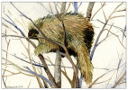 Porcupine_background