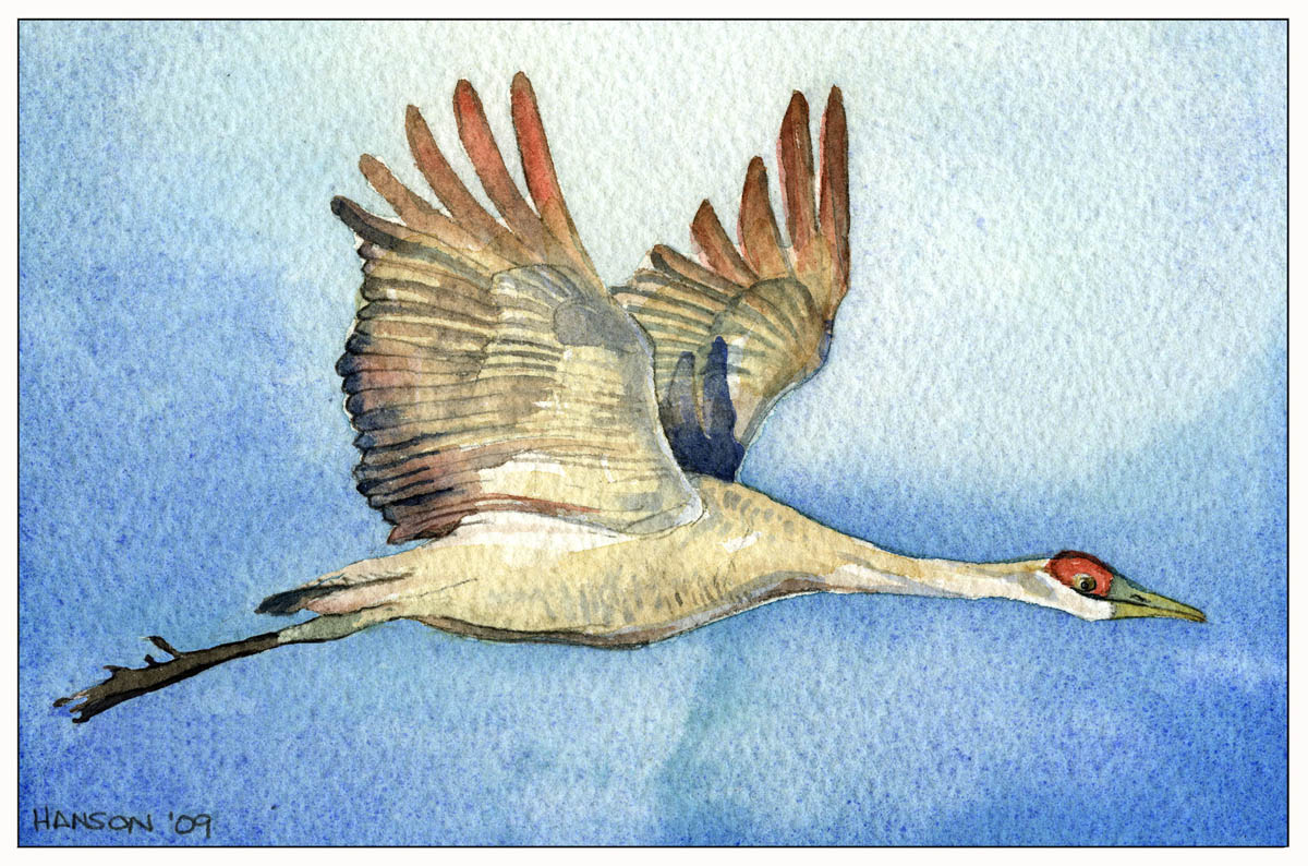 SandhillCrane_background