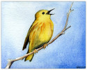 YellowWarbler_background