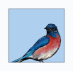 blue_bird_square