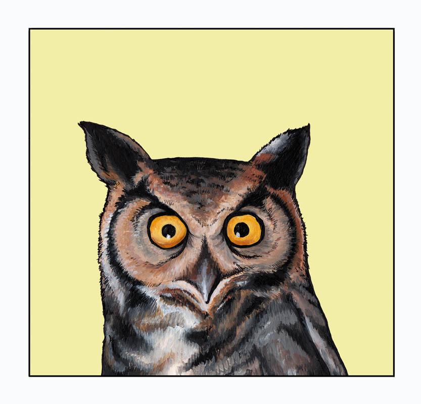 owl_square