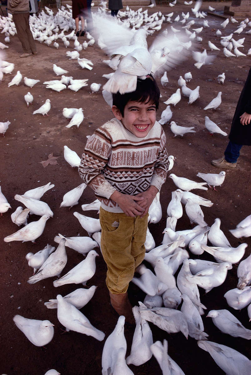 GiNo & Pigeons · María Luisa Park, Sevilla