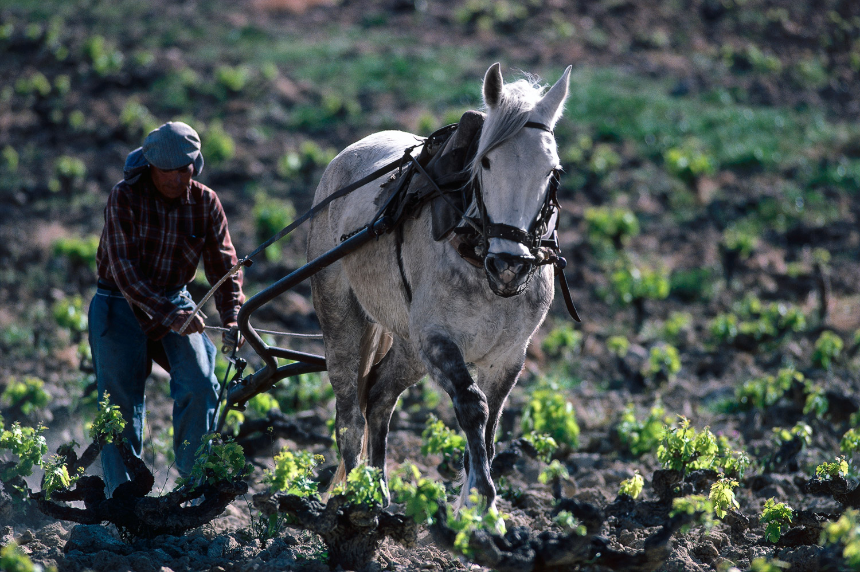 Plowing · Huelva