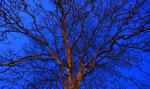 Twilight Tree #1 · Gernika