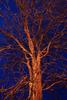 Twilight Tree #2 · Gernika