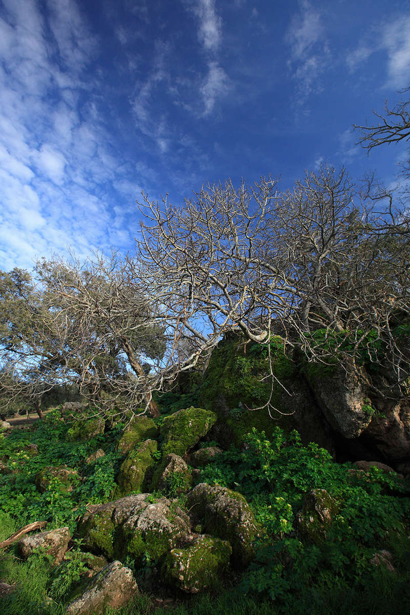 La Donaira · Ronda Mountains