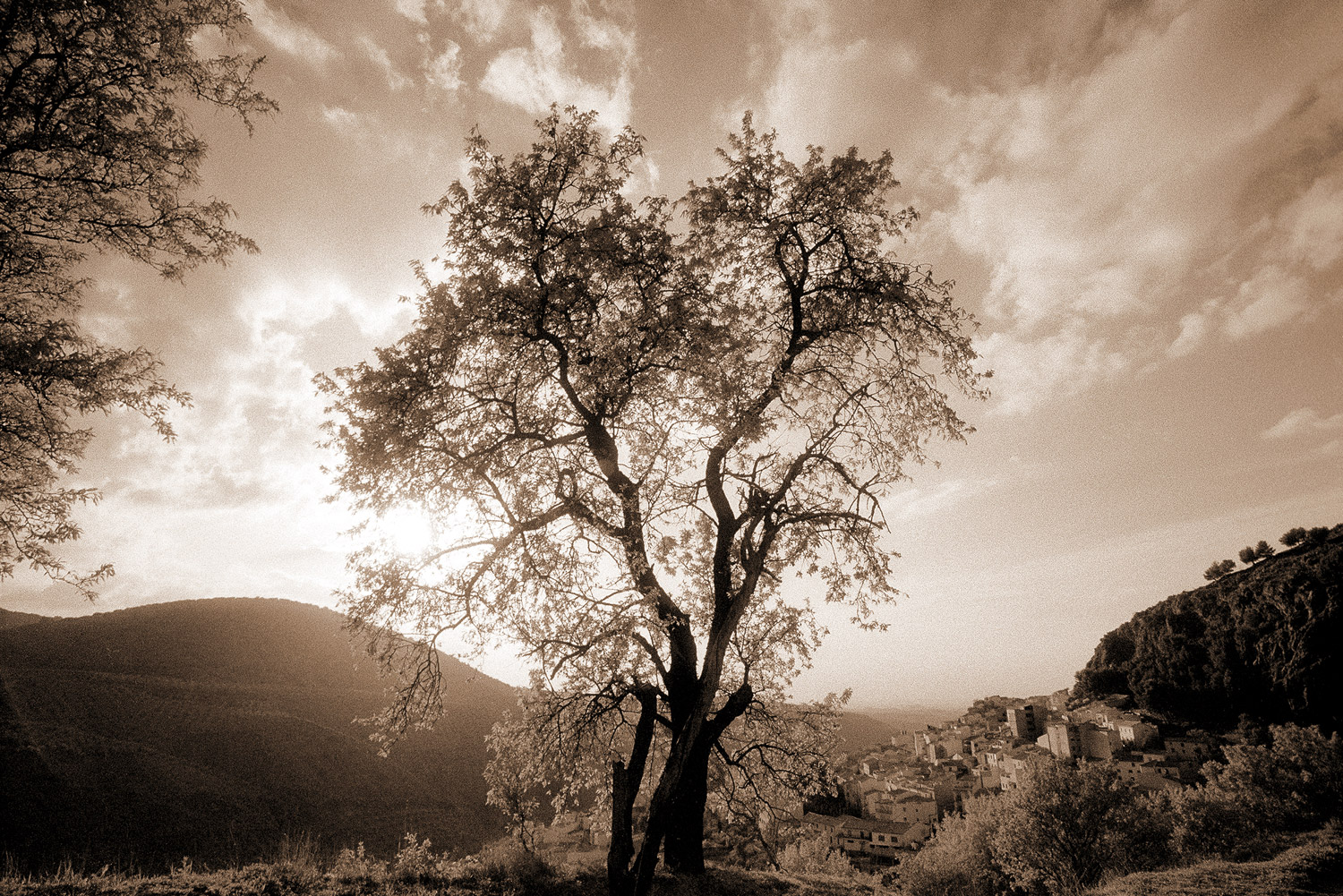 The Tree of Love · Torres, Jaén