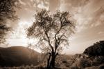 The Tree of Love · Torres, Jaén