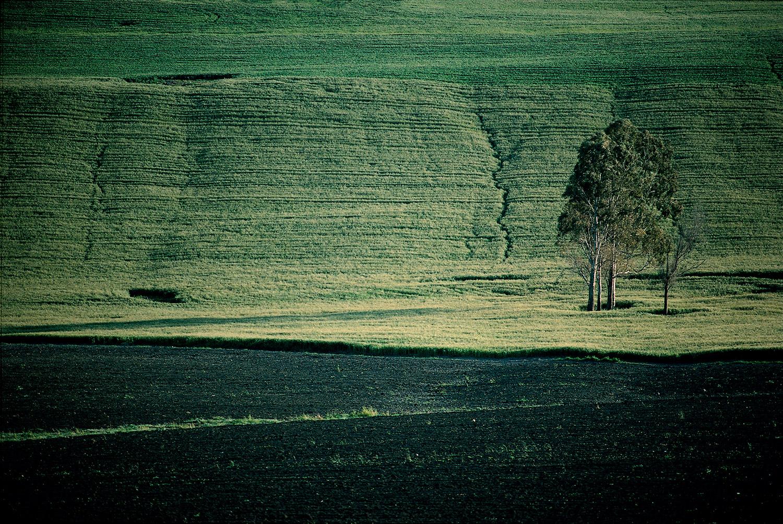 Field · Medina Sidonia, Cadíz
