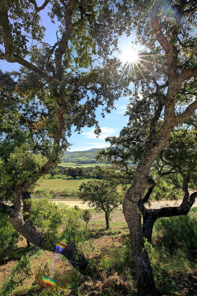 The Bodega La Melonera · Ronda