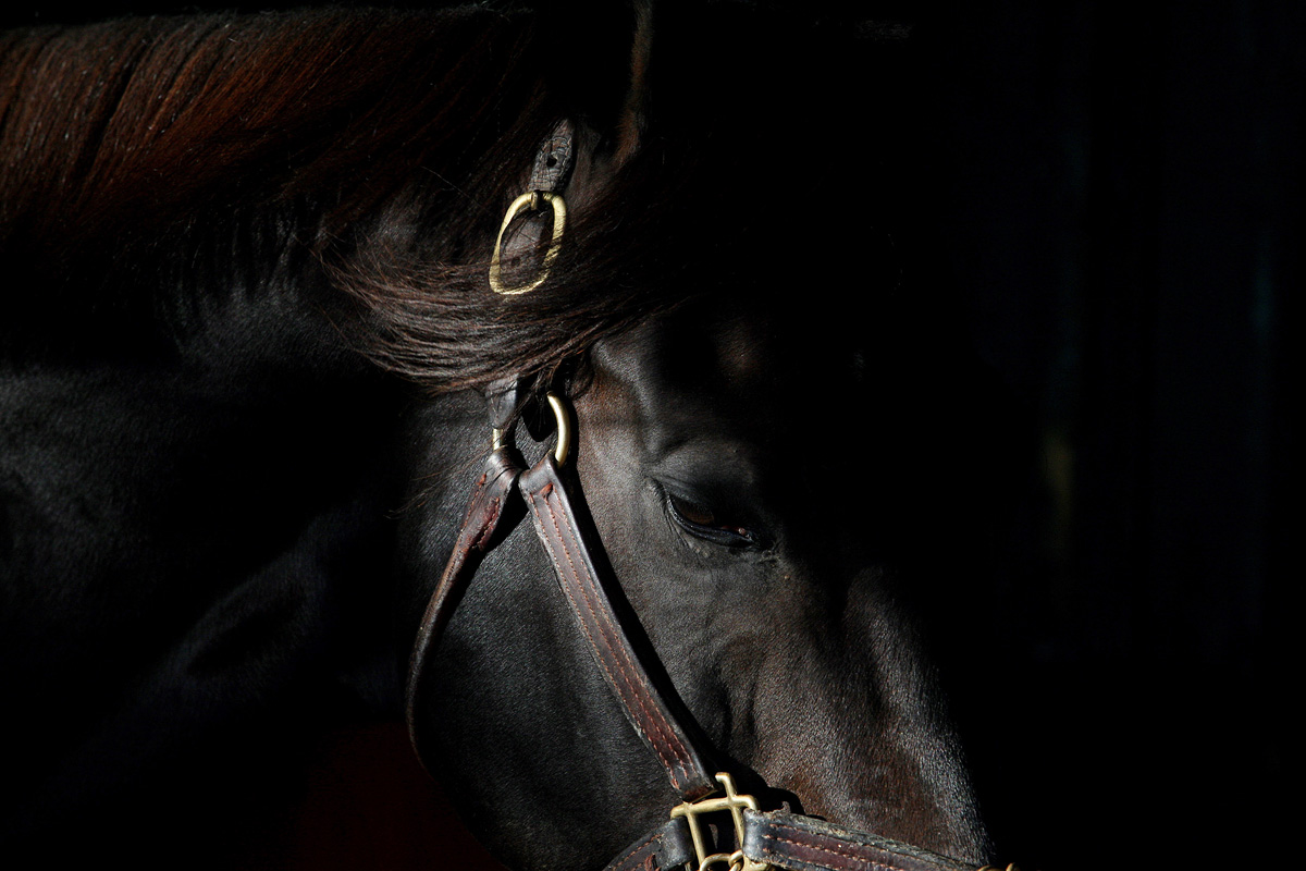 Photo By Bill Denver/EQUI-PHOTOAll Rights Reserved