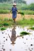 A woman plants rice in Jiangxi Province, China. Richard U. Light Foundation.
