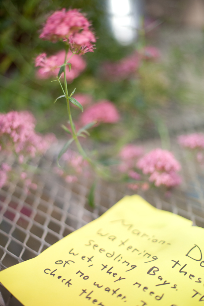 A note left by the curator of Greenhouse Plant Collections, for the person who waters the plants on the weekends.