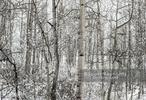 DSC_0527-Edit-4