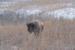 Here are some images to show the challenges of shooting in the snow.
