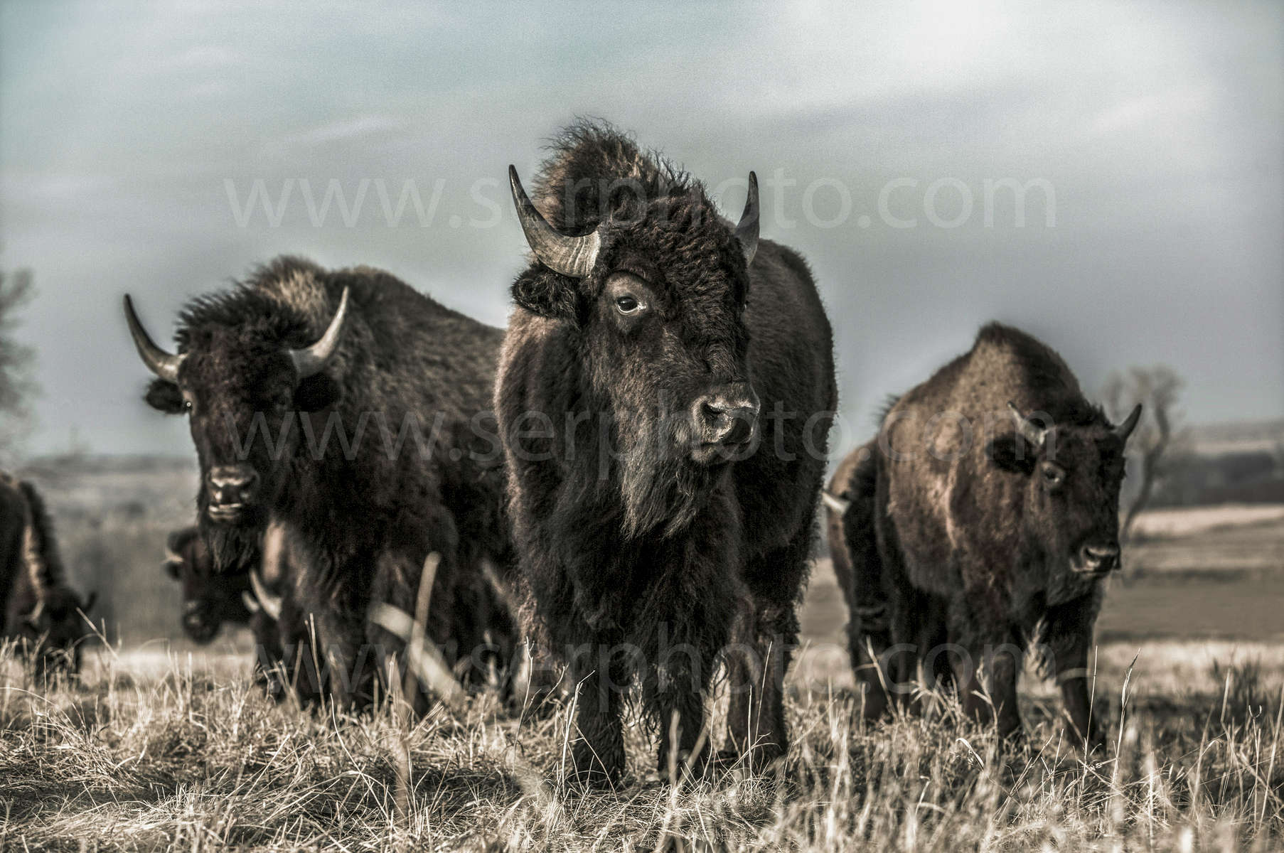 bison-group---RSH_0742--web