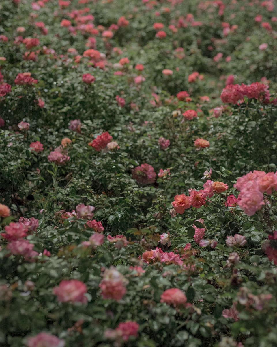 milan_flowers_1