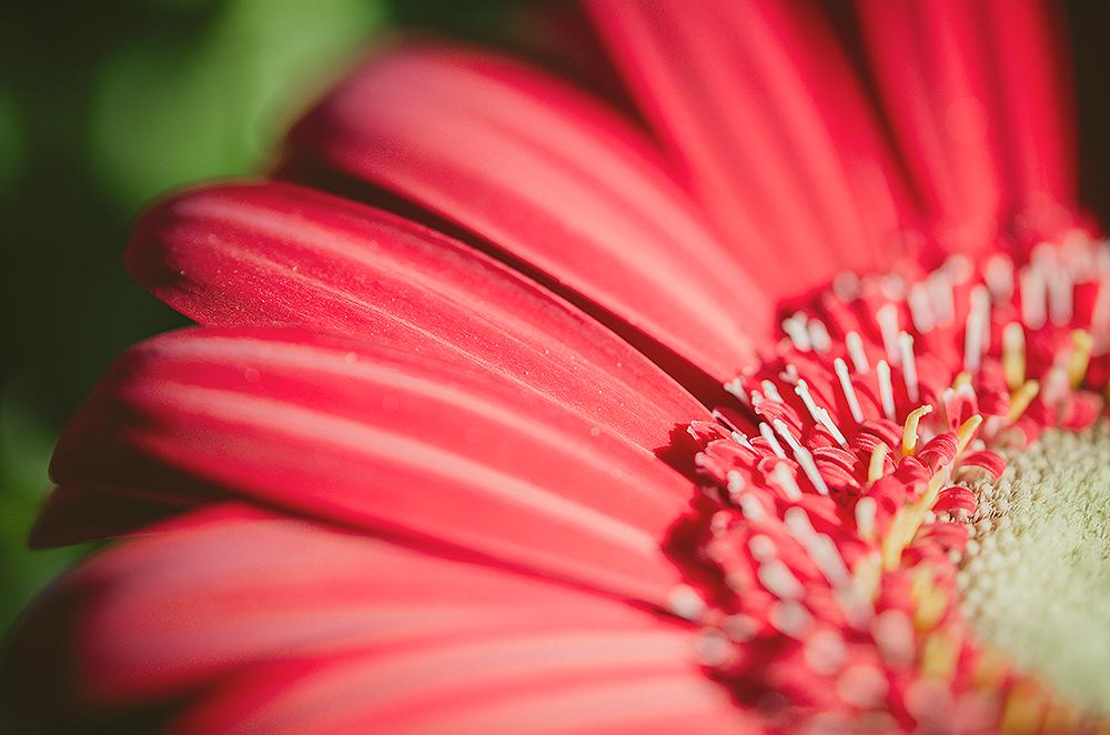 floral-chic-wedding-mallorca-adrian-hancu