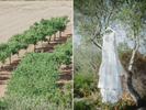 olive-tree-wedding-dress-ANYALBUFAR--MALLORCA_destination-wedding-photographer-adrian-hancu