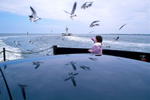 ferry passenger feeds seagulls the follow ferry through Pamlico Sound; Cape Hatteras Nat'l Seashore