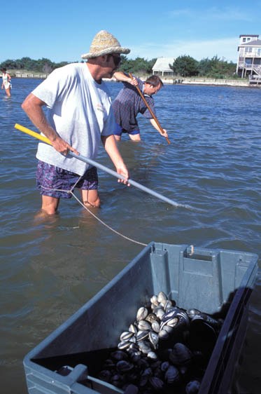 vacationers rake for clams in shallow waters around Ocracoke Island