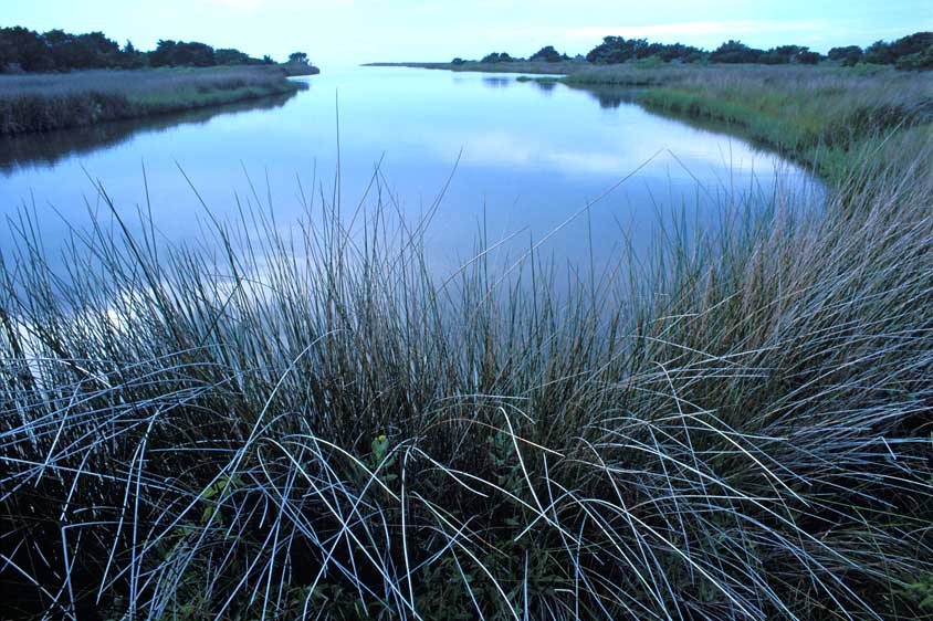sea grasses grow along Pamlico Sound inlet