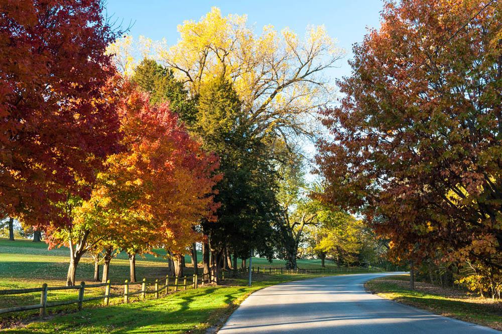 Autumn drive #2