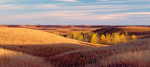 Photograph entitled Autumn cottonwoods, Kansas Flint Hills
