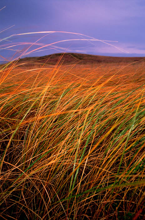 Photograph entitled Autumn tallgrass, Kansas Flint Hills