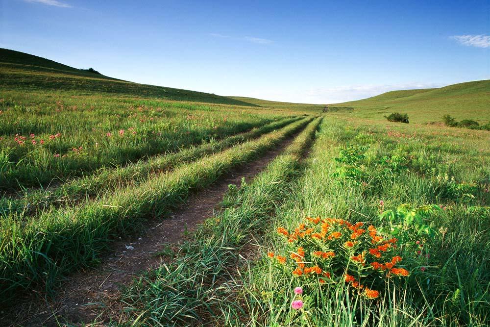 Picture of a Flint Hills springtime landscape