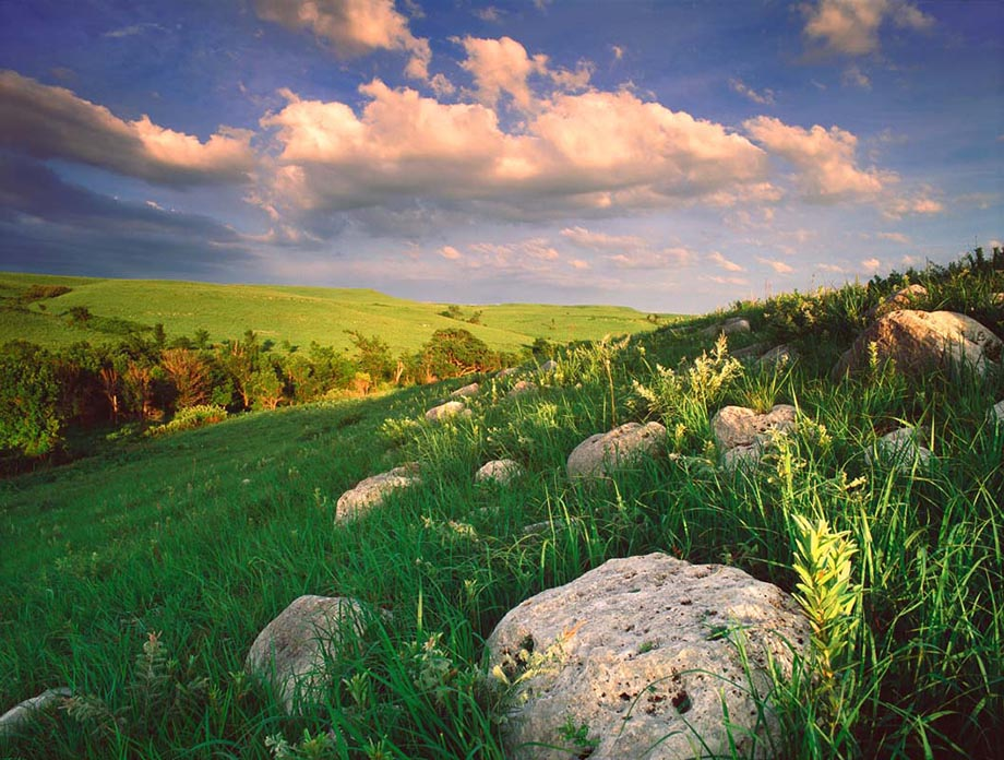 Limestone rock outcrop and tallgrass in summer, typical of the Kansas Flint Hills