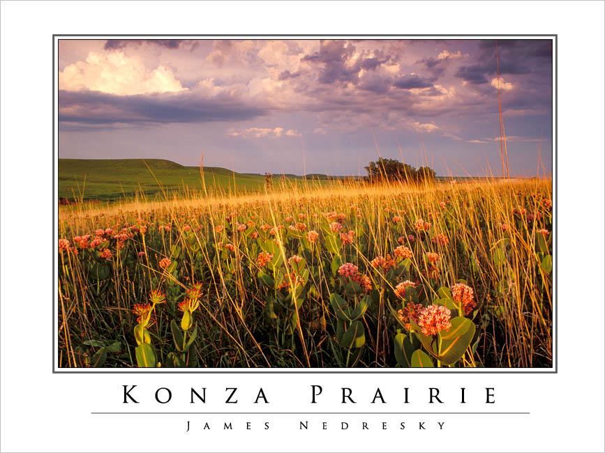 Konza_Prairie_poster_2