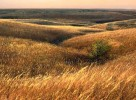 Photograph entitled November in the Kansas Flint Hills