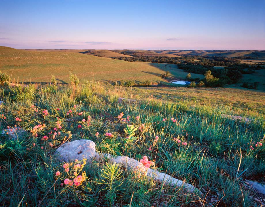Photo entitled Springtime on the Konza Prairie