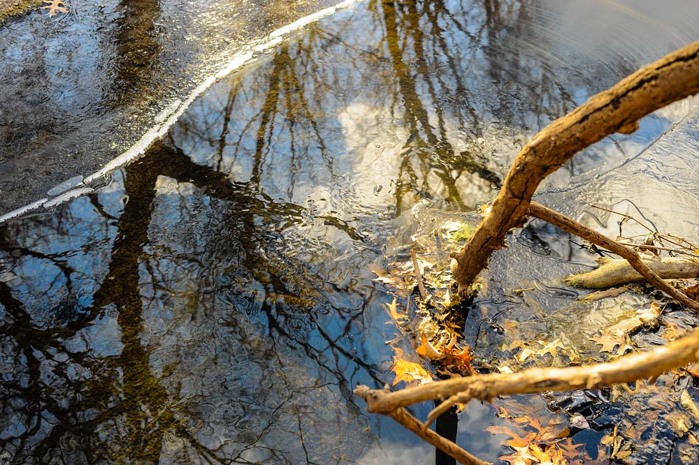 Photo entitled reflections of trees in iced-over creek