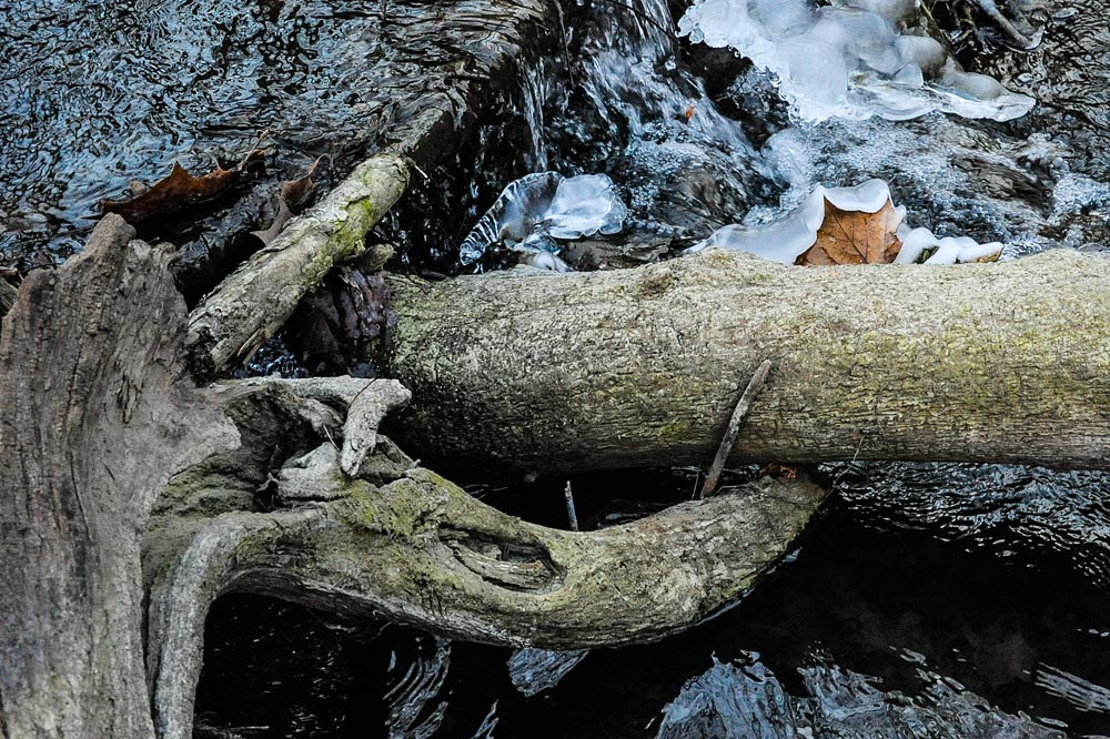 Photo entitled fallen tree and leaf in icyprairie creek