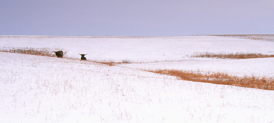 Photograph entitled Winter in the Kansas Flint Hills