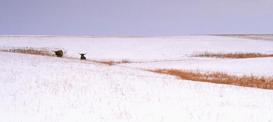 Photograph entitled Winter in the Kansas Flint Hills