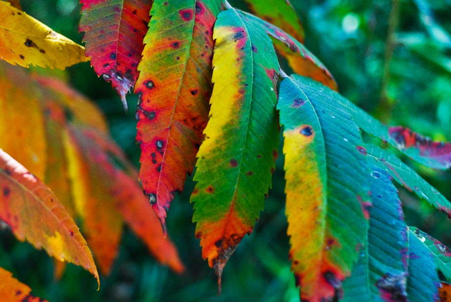 Photograph entitled Sumac in autumn, Kansas Flint Hills