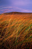 photograph of tallgrass in autumn in the Kansas Flint Hills