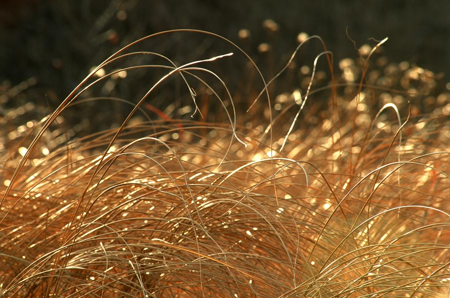 Photograph entitled Golden tallgrass of the Flint Hills