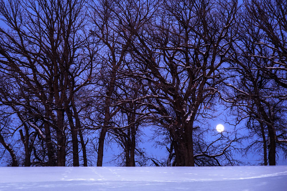 Winter moon and treeline