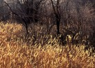 Picture of tallgrass in late-day light