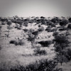 LV_AFRICA_ANIMALS_1_026