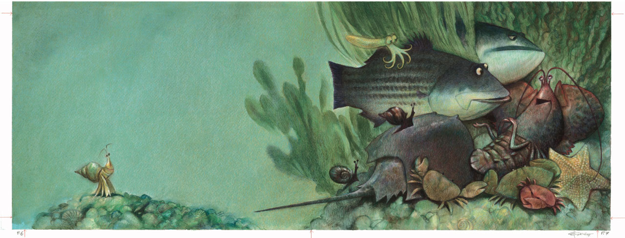 Hermit-Crab-4