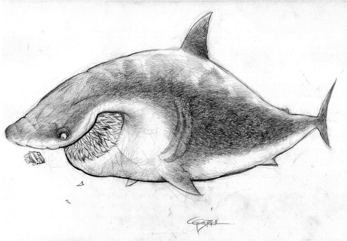 nemo-Shark1